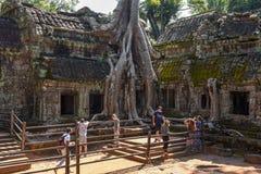Ο ναός TA Prohm σε Angkor Wat σύνθετο, Siem συγκεντρώνει, Καμπότζη Στοκ Εικόνα