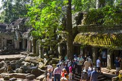 Ο ναός TA Prohm σε Angkor Wat σύνθετο, Siem συγκεντρώνει, Καμπότζη Στοκ εικόνα με δικαίωμα ελεύθερης χρήσης