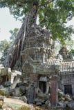 Ο ναός TA Prohm σε Angkor Wat σύνθετο, Siem συγκεντρώνει, Καμπότζη Στοκ Φωτογραφίες
