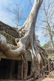 Ο ναός TA Prohm σε Angkor Wat σύνθετο, Siem συγκεντρώνει, Καμπότζη Στοκ εικόνες με δικαίωμα ελεύθερης χρήσης