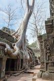 Ο ναός TA Prohm σε Angkor Wat σύνθετο, Siem συγκεντρώνει, Καμπότζη Στοκ φωτογραφίες με δικαίωμα ελεύθερης χρήσης