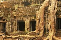 Ο ναός TA Promh, Angkor περιοχή, Siem συγκεντρώνει, Καμπότζη Στοκ Φωτογραφία