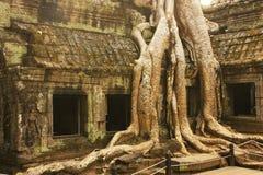 Ο ναός TA Promh, Angkor περιοχή, Siem συγκεντρώνει, Καμπότζη Στοκ φωτογραφίες με δικαίωμα ελεύθερης χρήσης