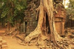 Ο ναός TA Promh, Angkor περιοχή, Siem συγκεντρώνει, Καμπότζη Στοκ εικόνα με δικαίωμα ελεύθερης χρήσης