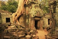 Ο ναός TA Promh, Angkor περιοχή, Siem συγκεντρώνει, Καμπότζη Στοκ φωτογραφία με δικαίωμα ελεύθερης χρήσης
