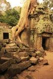 Ο ναός TA Promh, Angkor περιοχή, Siem συγκεντρώνει, Καμπότζη Στοκ Εικόνες