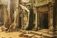 Ο ναός TA Promh, Angkor περιοχή, Siem συγκεντρώνει, Καμπότζη Στοκ Φωτογραφίες