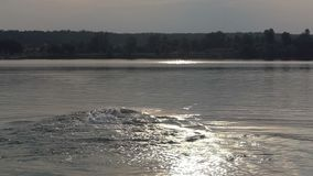 Ο νεαρός άνδρας κολυμπά σέρνεται στα νερά λιμνών στο ηλιοβασίλεμα στην slo-Mo φιλμ μικρού μήκους