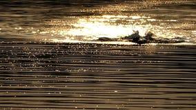 Ο νεαρός άνδρας κολυμπά το μέτωπο σέρνεται σε έναν λαμπιρίζοντας ποταμό τη νύχτα το καλοκαίρι στην slo-Mo φιλμ μικρού μήκους