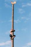 Ο νεαρός άνδρας αναρριχείται σε μια ξύλινη θέση στις παραδοσιακές διακοπές που αφιερώνονται στην προσέγγιση της άνοιξη Στοκ Εικόνες