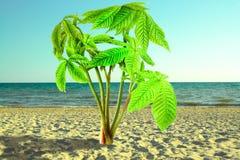 Ο νεαρός βλαστός του δέντρου κάστανων είναι όπως το φοίνικα, ο Μπους στην άμμο Στοκ εικόνα με δικαίωμα ελεύθερης χρήσης
