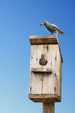 ο νεοσσός πουλιών ταΐζει το τους Στοκ Εικόνες