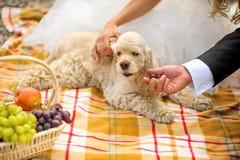 Ο νεόνυμφος, η νύφη και το σπανιέλ κόκερ σκυλιών ένα καλάθι πικ-νίκ Στοκ Εικόνα