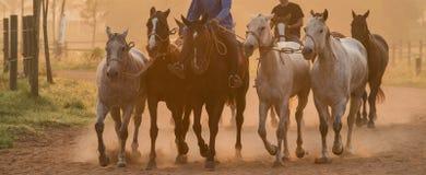 Ο νεόνυμφος και το άλογο πόλο είναι άσκηση στοκ φωτογραφία με δικαίωμα ελεύθερης χρήσης