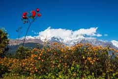 Ο νότος Annapurna και το Hiunchuli Στοκ εικόνα με δικαίωμα ελεύθερης χρήσης