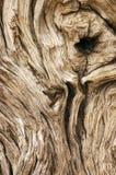 ο ξηρός εξαιρετικά έξω κορ&m Στοκ Εικόνες