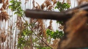 Ο ξηρός κάλαμος επενδύει με φτερά αργά να κινηθεί στον αέρα, άποψη μέσω της τρύπας φρακτών φιλμ μικρού μήκους