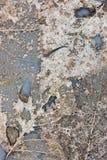 Ο ξηρός σκελετός αφήνει το σχέδιο στο γκρίζο υπόβαθρο Στοκ φωτογραφία με δικαίωμα ελεύθερης χρήσης