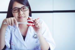Ο οδοντίατρος εντοπίζει τις πρότυπες οδοντοστοιχίες δοντιών με την οδοντόβουρτσα, οδοντική έννοια εξέτασης υγιεινολόγων Στοκ Φωτογραφίες