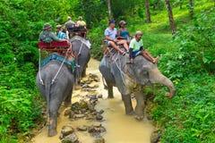 Οδοιπορία ελεφάντων στο εθνικό πάρκο Khao Sok Στοκ φωτογραφία με δικαίωμα ελεύθερης χρήσης