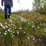 Οδοιπόρος που ανηφορικά στη μακριά χλόη με τα χνουδωτά λουλούδια Στοκ φωτογραφίες με δικαίωμα ελεύθερης χρήσης