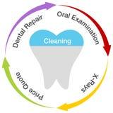 Οδοντικό διάγραμμα Στοκ φωτογραφία με δικαίωμα ελεύθερης χρήσης