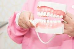 Οδοντικό πρότυπο μελέτης λαβής χεριών Στοκ Φωτογραφίες