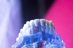 Οδοντικό πρότυπο δοντιών οδοντιάτρων Στοκ Φωτογραφίες