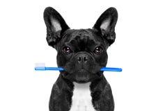 Οδοντικό σκυλί οδοντοβουρτσών Στοκ Εικόνα