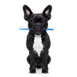 Οδοντικό σκυλί οδοντοβουρτσών Στοκ Φωτογραφίες