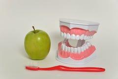 Οδοντόβουρτσα και πράσινο μήλο, οδοντική έννοια προσοχής Στοκ φωτογραφία με δικαίωμα ελεύθερης χρήσης