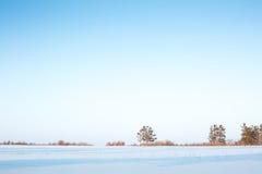 Ο ορίζοντας, τα δέντρα και το χιόνι στο δάσος Στοκ Εικόνα
