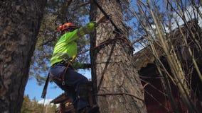 Ο ορειβάτης αναρριχείται σε ένα δέντρο απόθεμα βίντεο