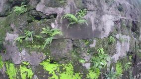 ο 16ος αιώνας περιτοίχισε εντός των τειχών τα λείψανα και τα υπόλοιπα πόλεων φιλμ μικρού μήκους