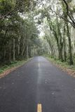 Οδοστρώματα στο δάσος Στοκ φωτογραφία με δικαίωμα ελεύθερης χρήσης