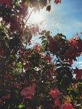 Ο ουρανός ανθίζει τις ρόδινες κήπων πράσινες εγκαταστάσεις φύσης τοπίων φύσης βοτανικές στοκ φωτογραφία με δικαίωμα ελεύθερης χρήσης