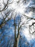 Ο ουρανός επάνω από ένα χειμερινό δάσος. Στοκ Εικόνες