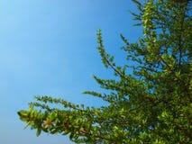 Ο ουρανός μου Στοκ Φωτογραφίες
