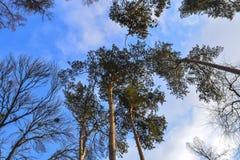 Ο ουρανός στο χειμερινό πάρκο Στοκ Εικόνα