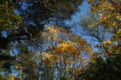 Ο ουρανός φθινοπώρου Στοκ εικόνα με δικαίωμα ελεύθερης χρήσης
