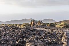 Ο οδηγός καμηλών καθοδηγεί το τροχόσπιτο καμηλών μέσω της ηφαιστειακής περιοχής Στοκ Εικόνες
