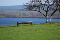 Ο πάγκος και το δέντρο Στοκ φωτογραφία με δικαίωμα ελεύθερης χρήσης