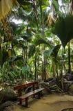 Ο πάγκος στη ζούγκλα, Vallee de Mai στοκ εικόνες με δικαίωμα ελεύθερης χρήσης