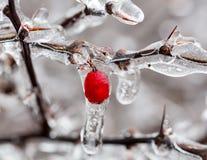 Ο πάγος κάλυψε την έναρξη κλάδων για να λειώσει στα παγάκια Στοκ Φωτογραφία