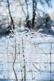 Ο πάγος κάλυψε τους κλάδους που μπλέχτηκαν στο φράκτη καλωδίων Στοκ Φωτογραφία