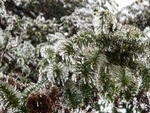 Ο πάγος τα δέντρα Στοκ εικόνα με δικαίωμα ελεύθερης χρήσης