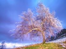 Ο πάγος Shinning στους κλαδίσκους, στους κλάδους, ο πάγος κάλυψε το φλοιό του δέντρου Στοκ Φωτογραφίες