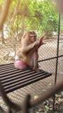 Ο πίθηκος είναι παγιδευμένος μέσα στο κλουβί στοκ φωτογραφία με δικαίωμα ελεύθερης χρήσης