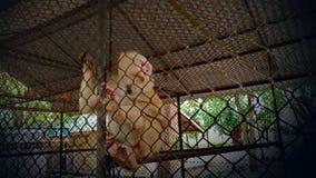 Ο πίθηκος είναι παγιδευμένος μέσα στο κλουβί στοκ εικόνα