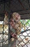 Ο πίθηκος είναι παγιδευμένος μέσα στο κλουβί στοκ εικόνες